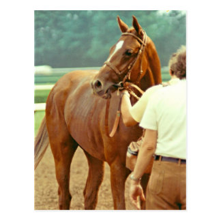Affirmed Thoroughbred Racehorse 1978 Postcard