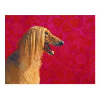 Afghan Hound Cards and GIfts