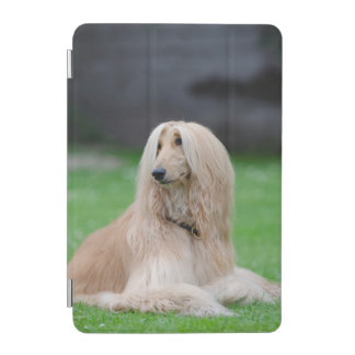 Afghan Hound dog beautiful photo ipad mini cover