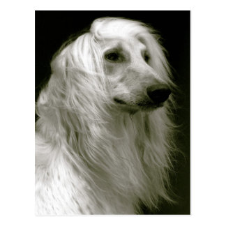 Afghan hound postcard