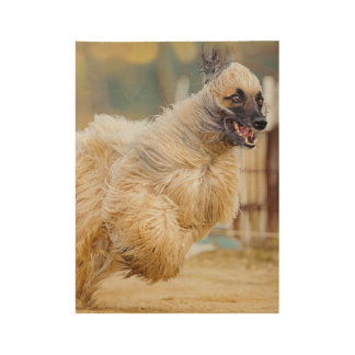 Afghan hound running wood poster
