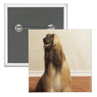 Afghan hound sitting in room 2 15 cm square badge