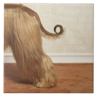 Afghan hound standing in room, end section large square tile