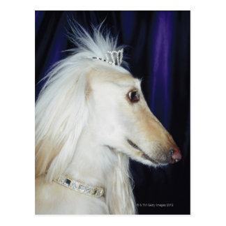 Afghan Hound wearing Tiara Postcard