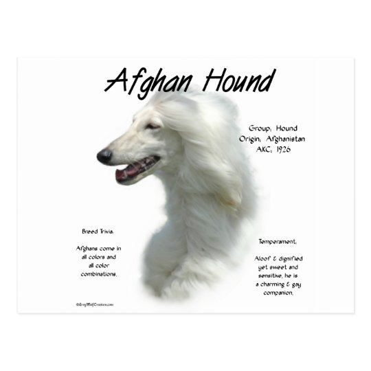 Afghan Hound (wht) History Design Postcard