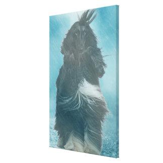 Afghan Hound Wind and Rain Blown Canvas Print
