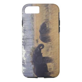 AFRICA, Botswana, African Elephant iPhone 7 Case