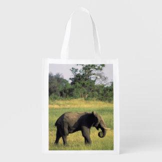 Africa, Botswana, Chobe National Park. Elephant