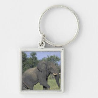 AFRICA, Botswana, Chobe National Park, Elephant Silver-Colored Square Key Ring
