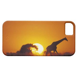 Africa, Botswana, Chobe National Park, Giraffe 2 Case For The iPhone 5