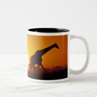Africa, Botswana, Chobe National Park, Giraffe 2 Two-Tone Mug