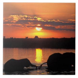 Africa, Botswana, Chobe National Park, Herd of Large Square Tile