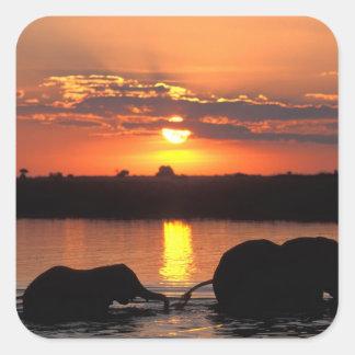 Africa, Botswana, Chobe National Park, Herd of Square Sticker