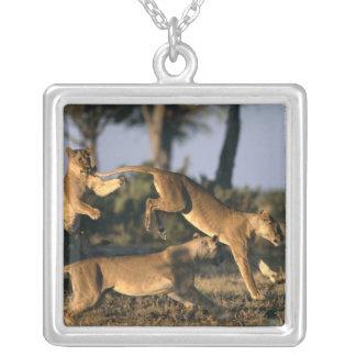 Africa, Botswana, Chobe National Park, Lionesses Square Pendant Necklace