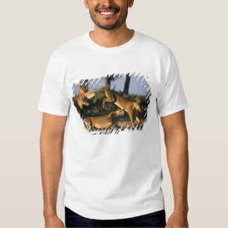 Africa, Botswana, Chobe National Park, Lionesses Tee Shirt