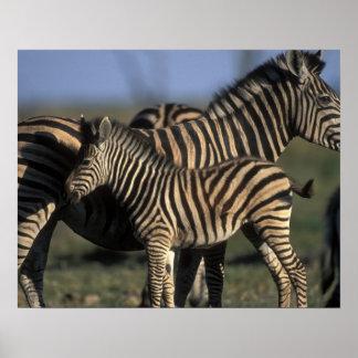 Africa, Botswana, Chobe National Park, Plains Poster