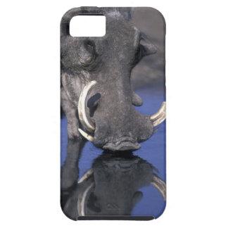 Africa, Botswana, Chobe National Park, Warthog iPhone 5 Cases