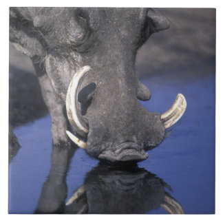 Africa, Botswana, Chobe National Park, Warthog Large Square Tile
