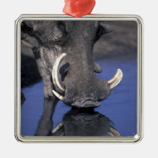 Africa, Botswana, Chobe National Park, Warthog Metal Ornament