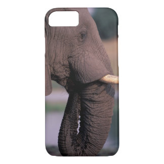 Africa, Botswana. Elephant (Loxodanta Africana) iPhone 7 Case