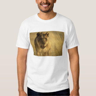 Africa, Botswana, Moremi Game Reserve, Lioness Tees