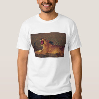 Africa,Botswana,Moremi Wildlife Reserve. Lioness T Shirt