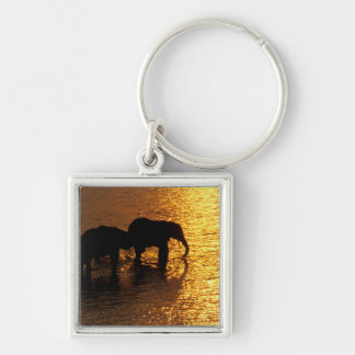 Africa, Botswana, Okavango Delta. African Silver-Colored Square Key Ring