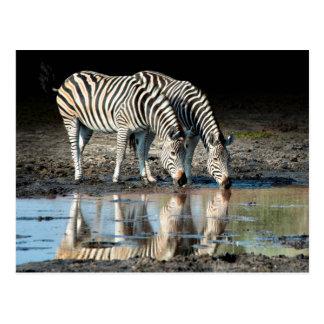 Africa,Botswana, Okavango Delta, Davison Camp Postcard