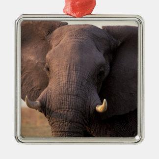 Africa, Botswana, Okavango Delta. Elephant Silver-Colored Square Decoration