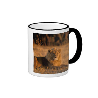 Africa, Botswana, Okavango Delta. Lion (Panthera Mugs