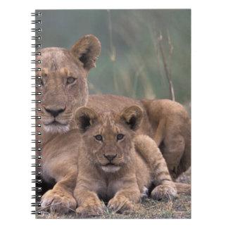 Africa, Botswana, Okavango Delta. Lions Spiral Notebook