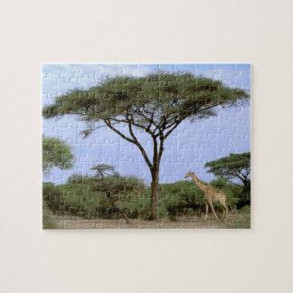 Africa, Botswana, Okavango Delta. Southern Jigsaw Puzzle