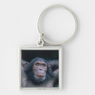Africa, East Africa, Tanzania, Gombe National 2 Key Chain