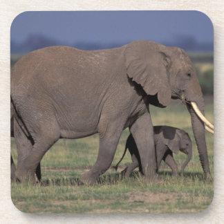 Africa, Kenya, Amboseli National Park. African 4 Beverage Coasters