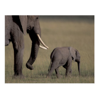 Africa, Kenya, Amboseli National Park. African Postcard