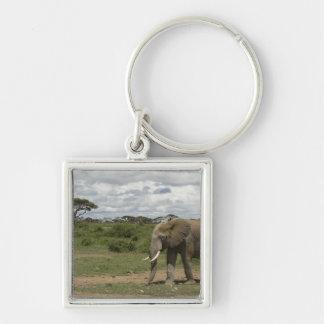 Africa, Kenya, Amboseli National Park, elephant, Key Chains