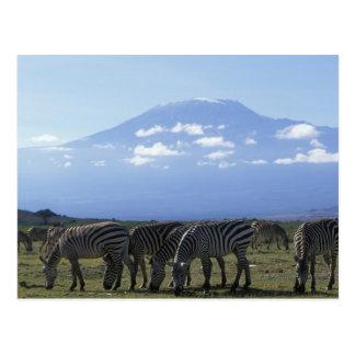 Africa, Kenya, Amboseli National Park, Herd of Postcard