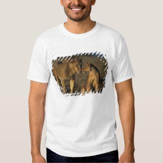 Africa, Kenya, Buffalo Springs National Reserve, T Shirt