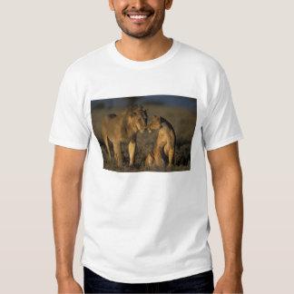 Africa, Kenya, Buffalo Springs National Reserve, Tshirts