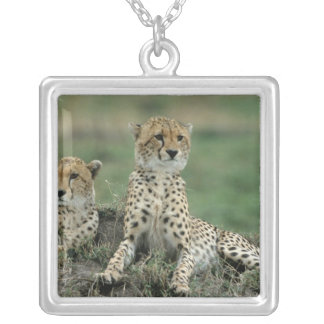 Africa, Kenya, Cheetahs Square Pendant Necklace