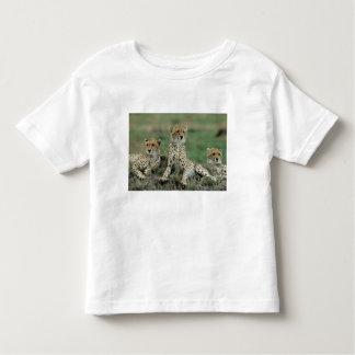 Africa, Kenya, Cheetahs Toddler T-Shirt
