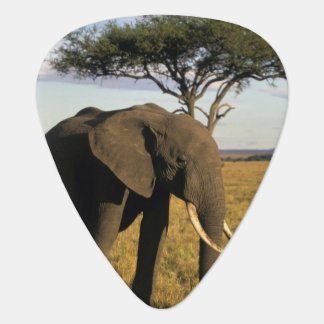 Africa, Kenya, Maasai Mara. An elehpant in the Guitar Pick
