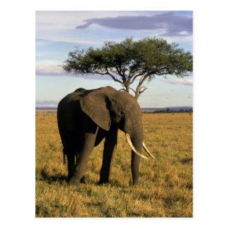 Africa, Kenya, Maasai Mara. An elehpant in the Postcard