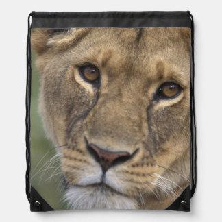 Africa, Kenya, Masai Mara Game Reserve, 2 Backpacks