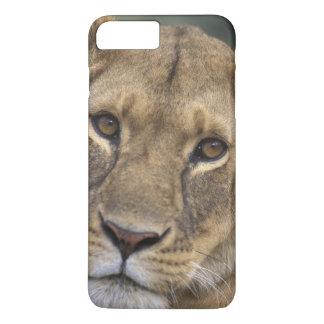Africa, Kenya, Masai Mara Game Reserve, 2 iPhone 7 Plus Case