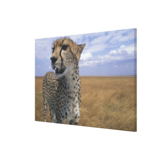 Africa, Kenya, Masai Mara Game Reserve, Adult 2 Gallery Wrapped Canvas