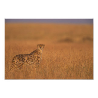 Africa, Kenya, Masai Mara Game Reserve, Adult Photo Print
