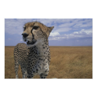 Africa, Kenya, Masai Mara Game Reserve, Adult Poster