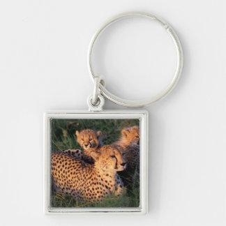 Africa, Kenya, Masai Mara Game Reserve. Cheetah 2 Keychain