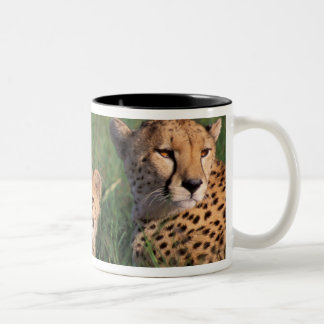 Africa, Kenya, Masai Mara Game Reserve. Cheetah Two-Tone Coffee Mug
